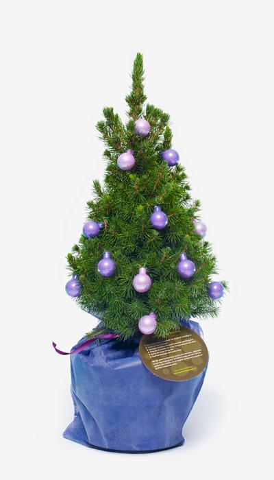 offrir un sapin arbre cadeau no l france. Black Bedroom Furniture Sets. Home Design Ideas